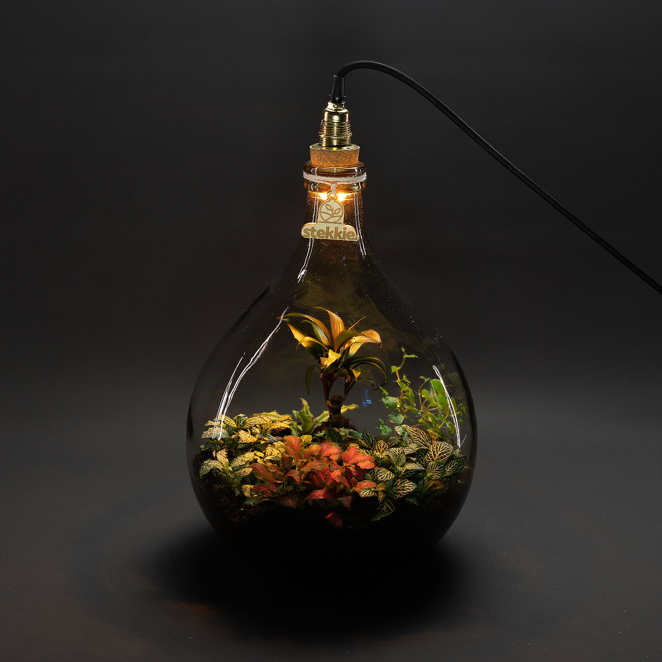 stekkie-medium-mini-ecosysteem-lamp-donker