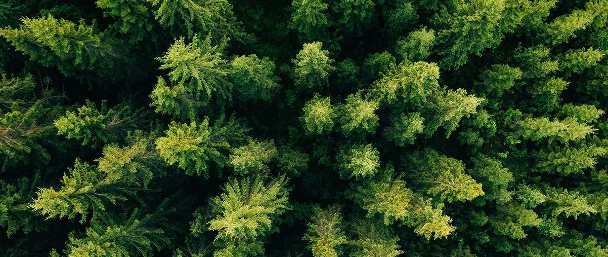 biotoop bos ecosysteem