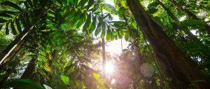 Ecosysteem groot erwoud groot