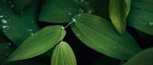 zelfvoorzienend bos ecosysteem