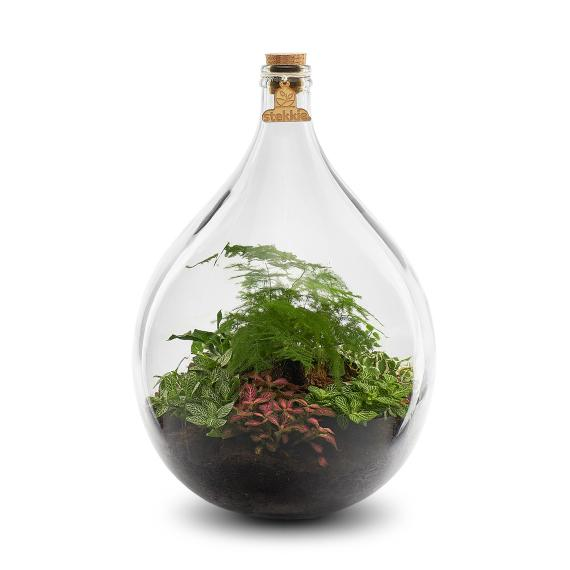Onderhoudsloze mini ecosysteem met tropische planten en houten label en kurk
