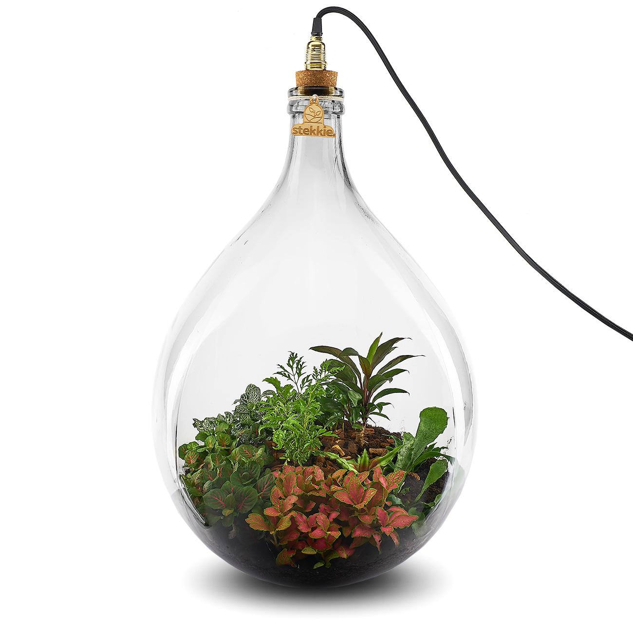 Stekkie Extra-Large mini-ecosysteem met rode accentkleur en lamp