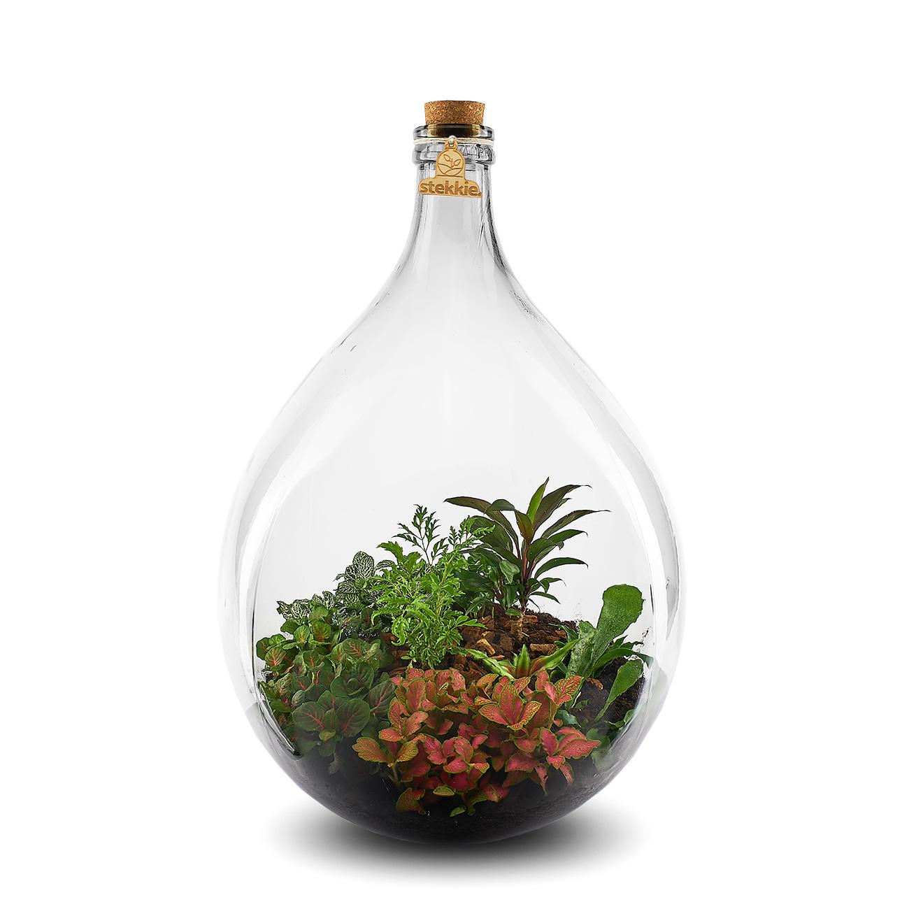 Stekkie Extra-Large mini-ecosysteem met kleurrijke planten