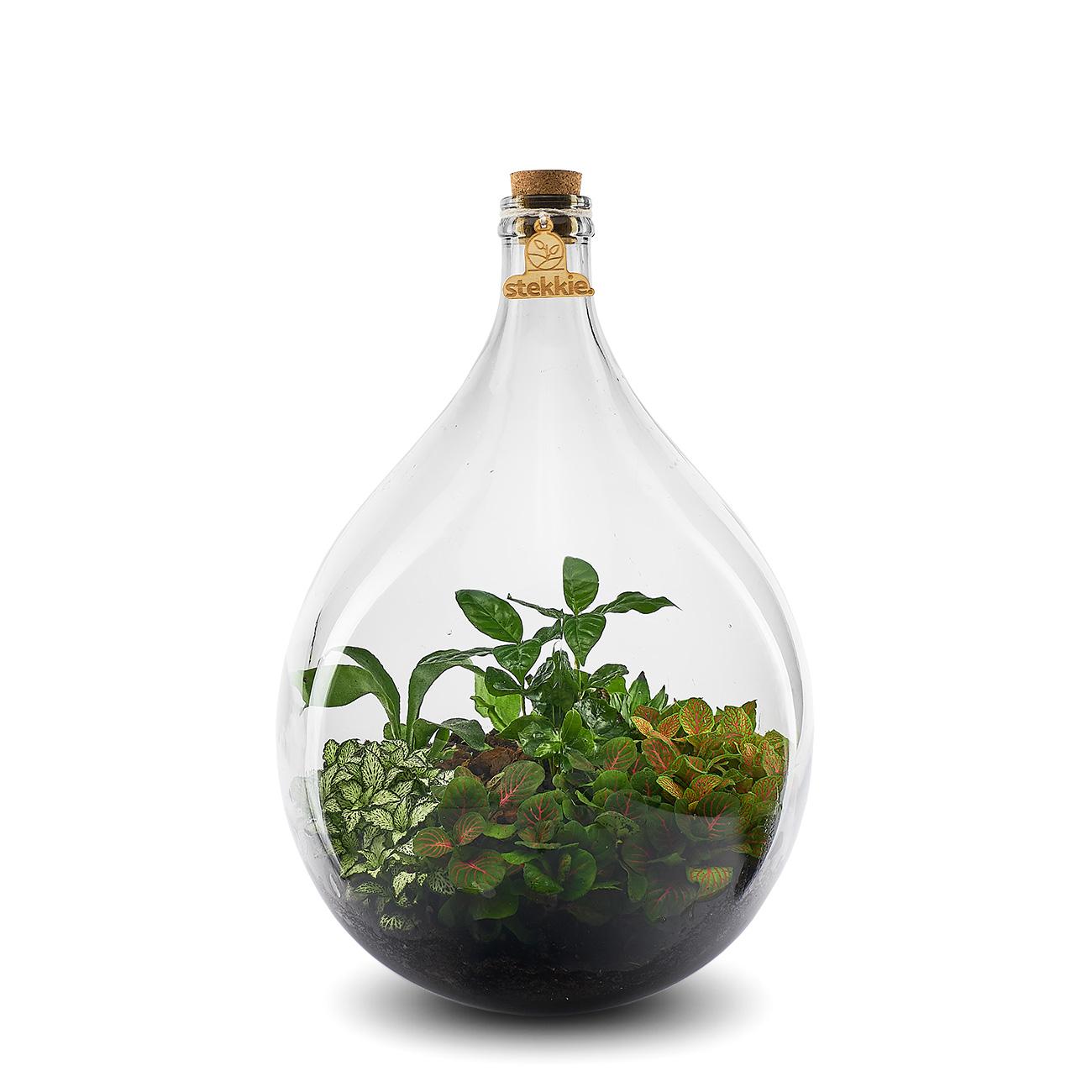 Stekkie Large mini-ecosysteem met gele accentkleur en koffieplant