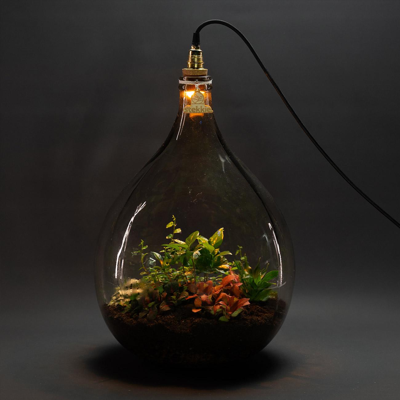 Stekkie Large mini-ecosysteem met lamp in het donker