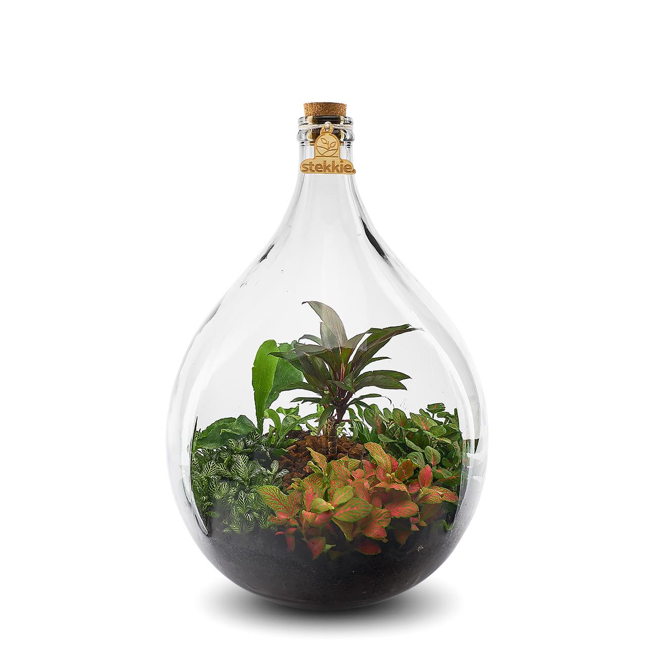Stekkie Large mini-ecosysteem met rode accentkleur en mini palm
