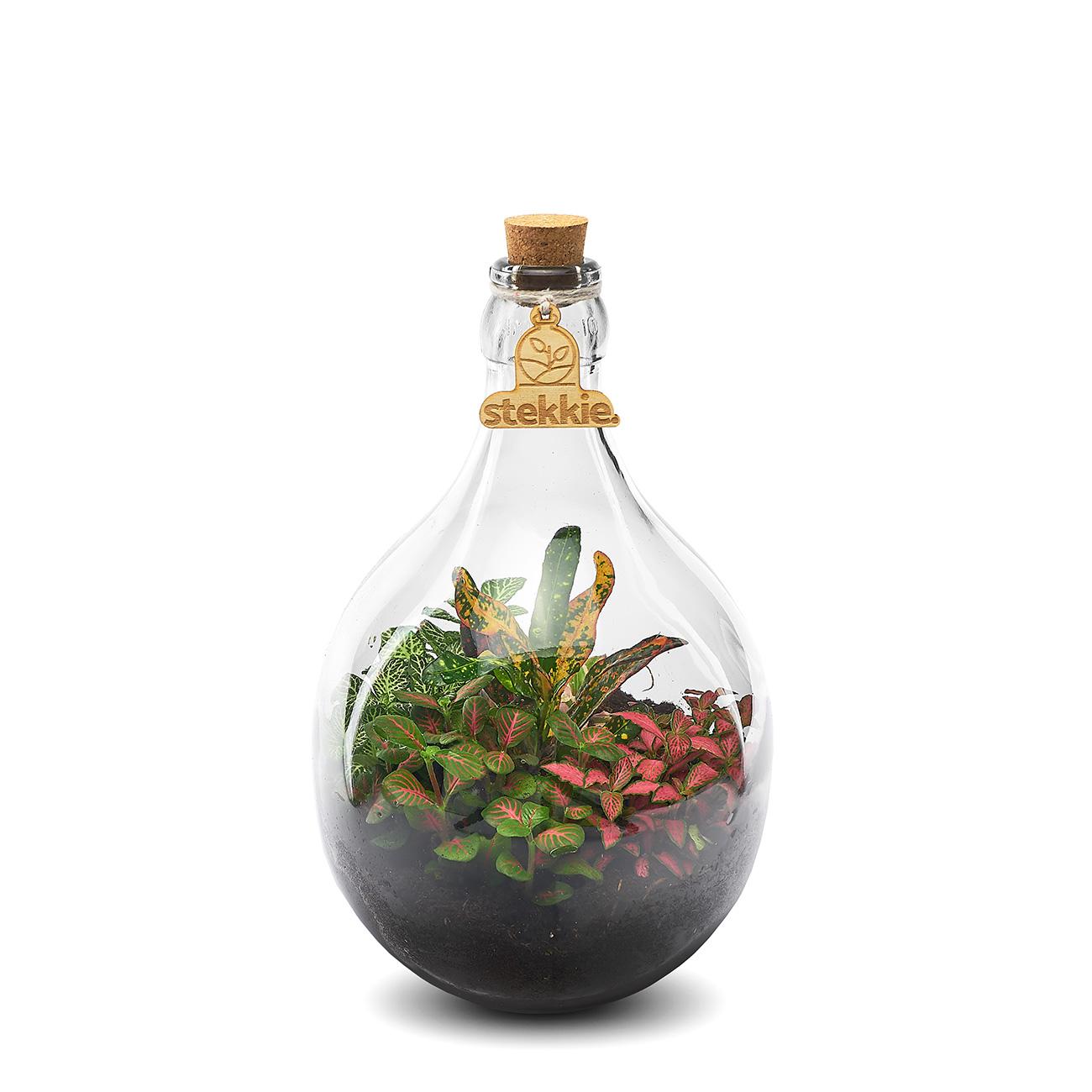 Stekkie Small mini-ecosysteem met kleurrijke planten
