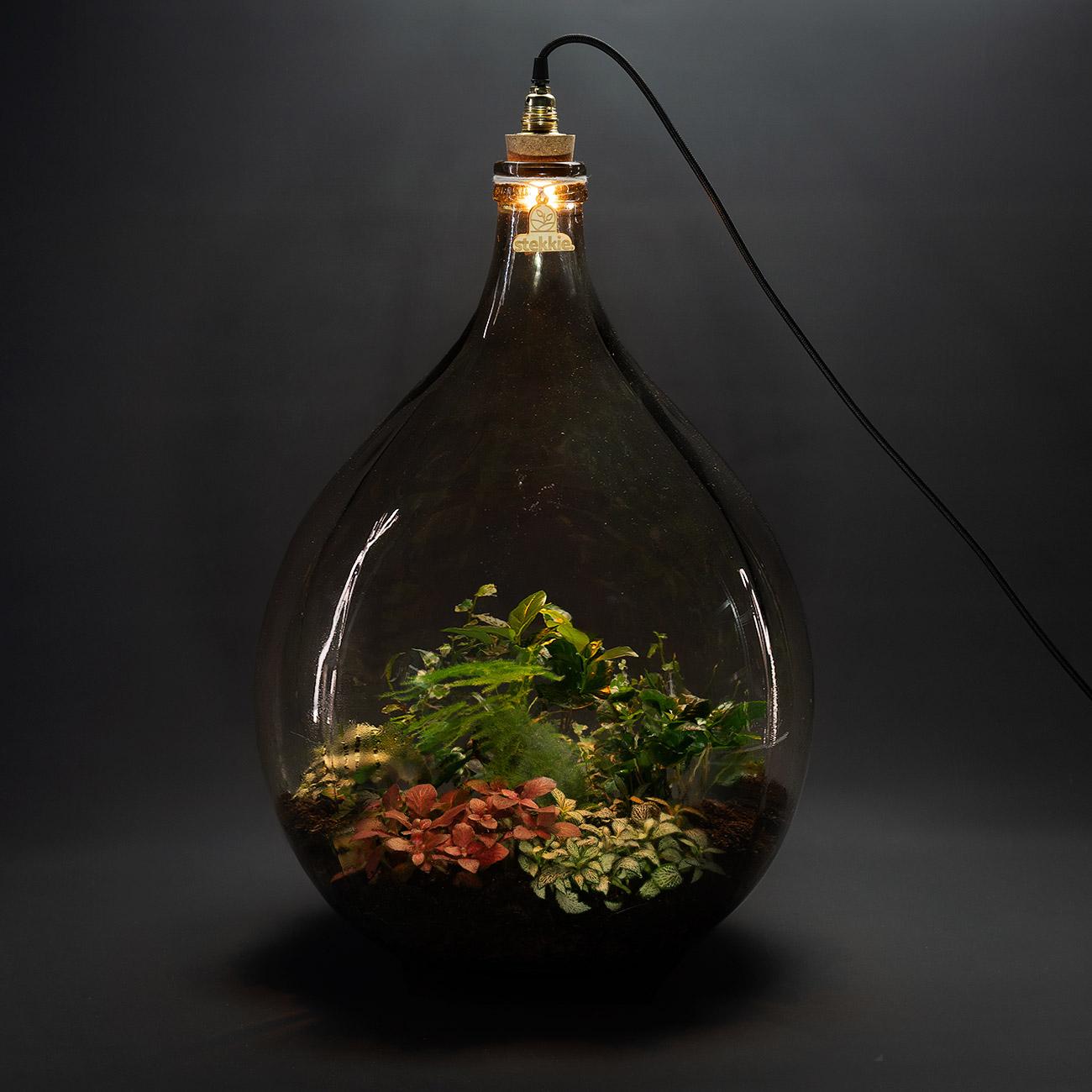 stekkie-extra-large-mini-ecosysteem-lamp-donker-1