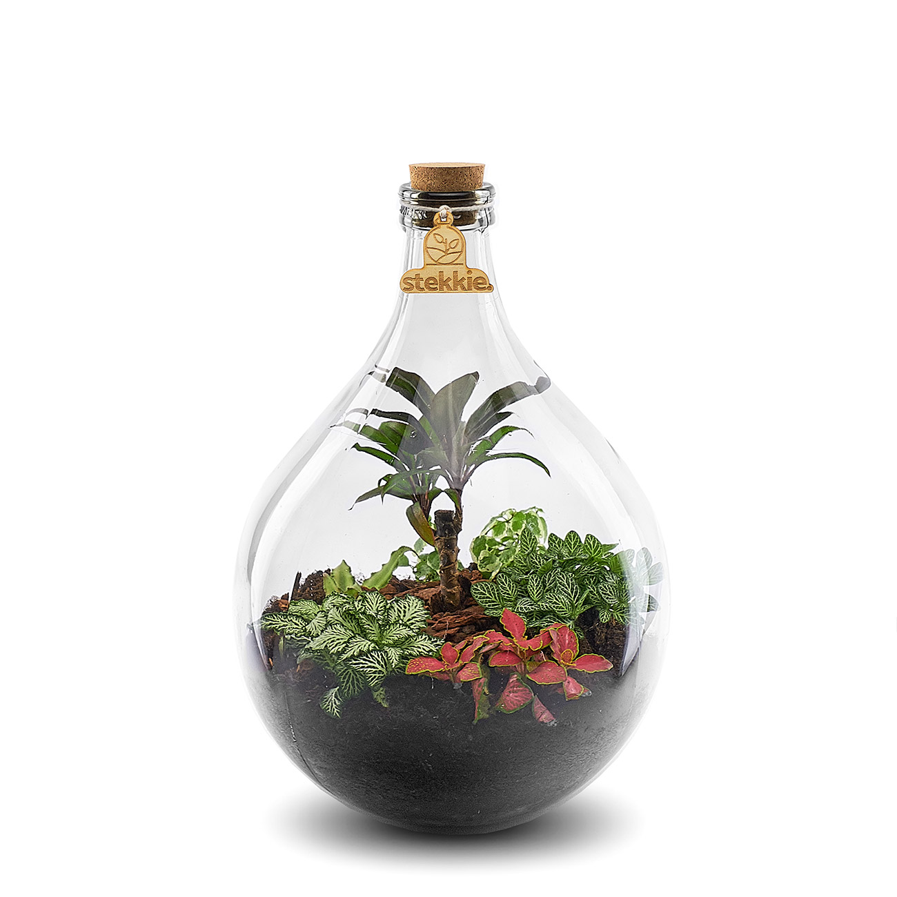 stekkie-medium-mini-ecosysteem