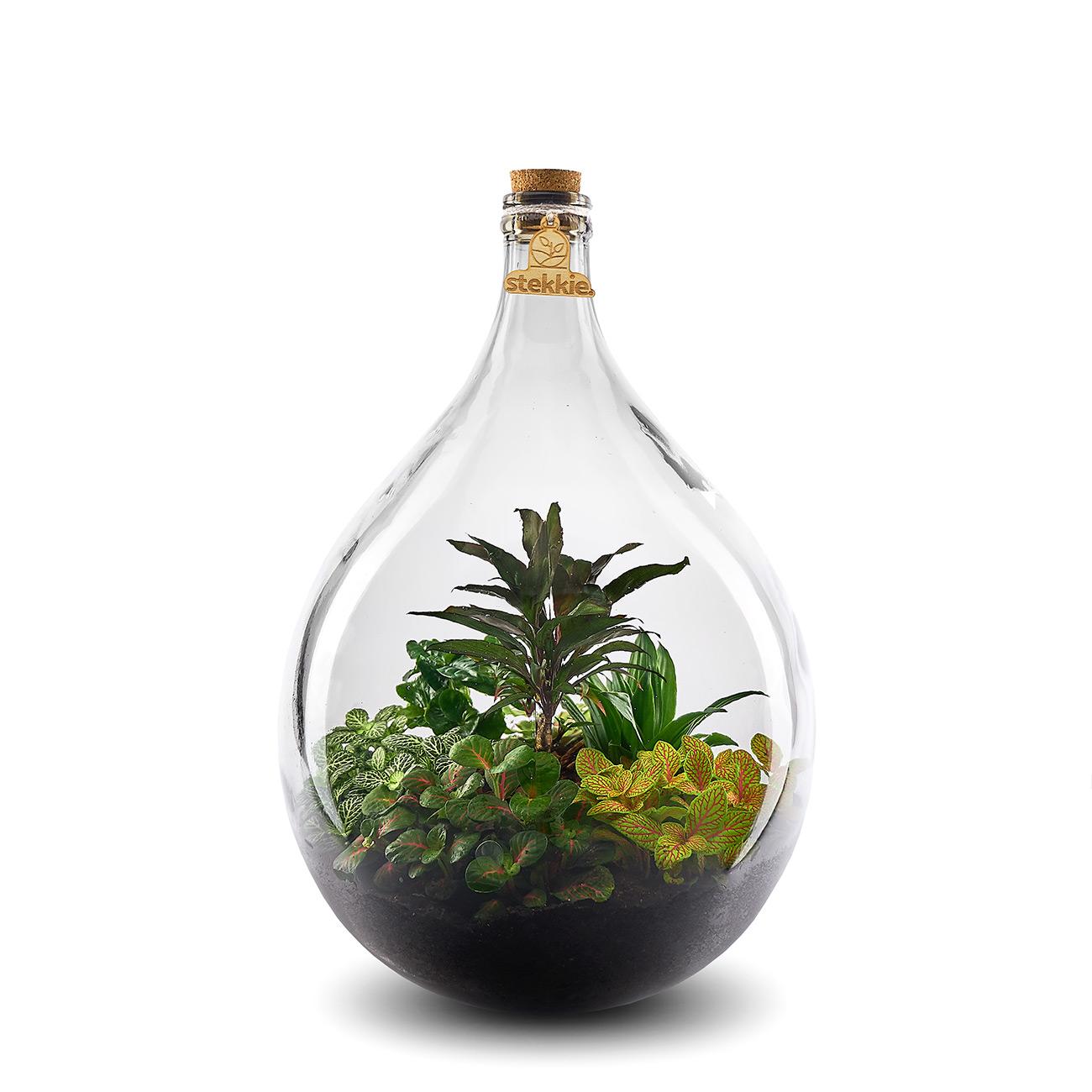 stekkie-large-geel-planten-terrarium