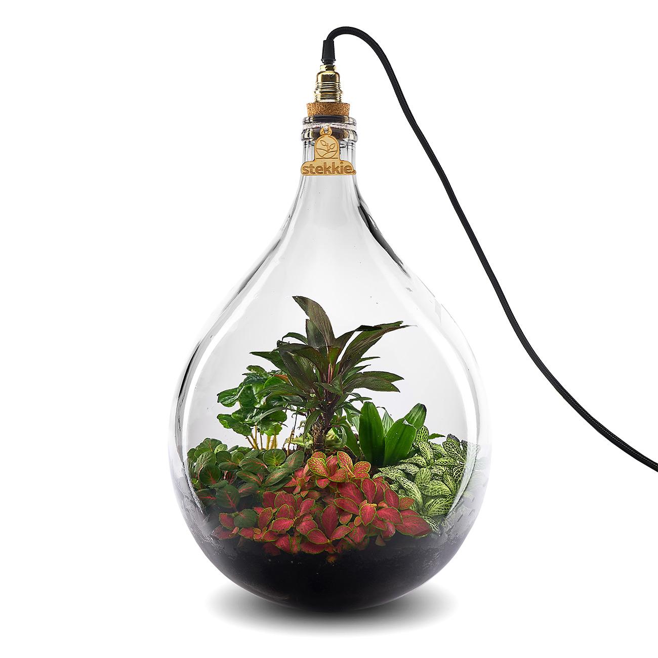 Stekkie Large (rode accentkleur) mini-ecosysteem/planten terrarium met lamp