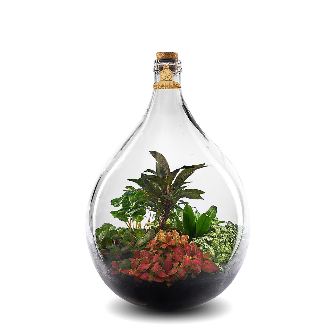 stekkie-large-rood-planten-terrarium