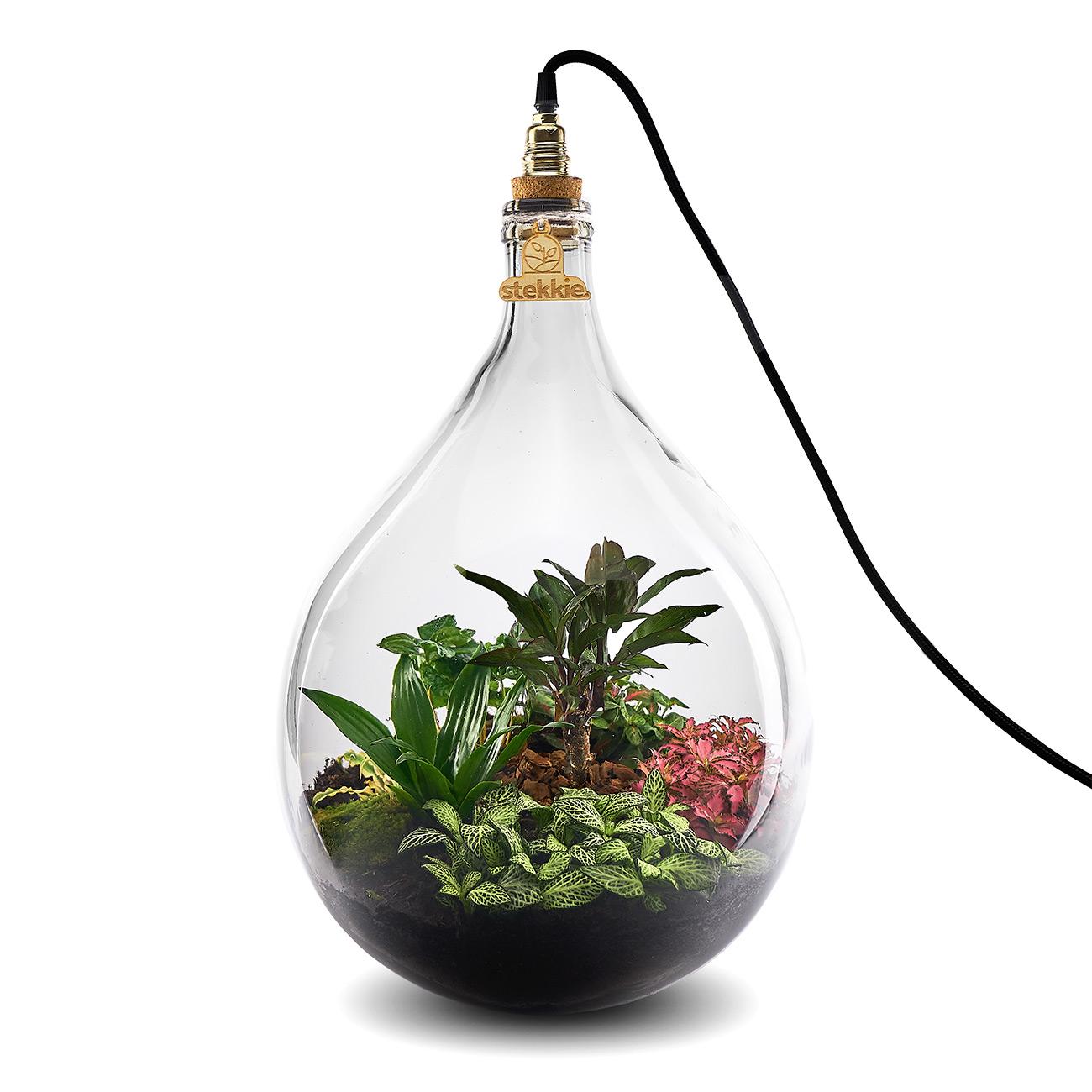 Stekkie Large (roze accentkleur) mini-ecosysteem/planten terrarium met lamp