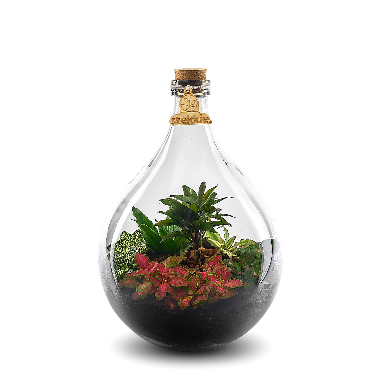 stekkie-medium-planten-terrarium