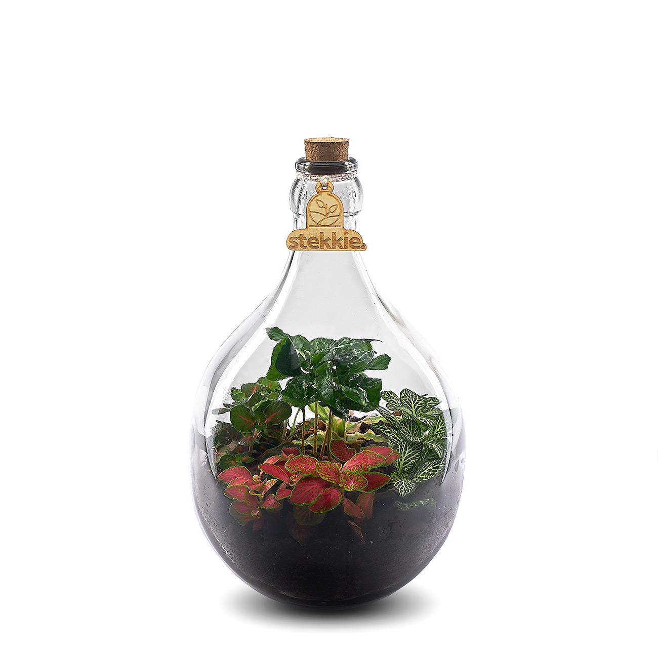stekkie-small-planten-terrarium
