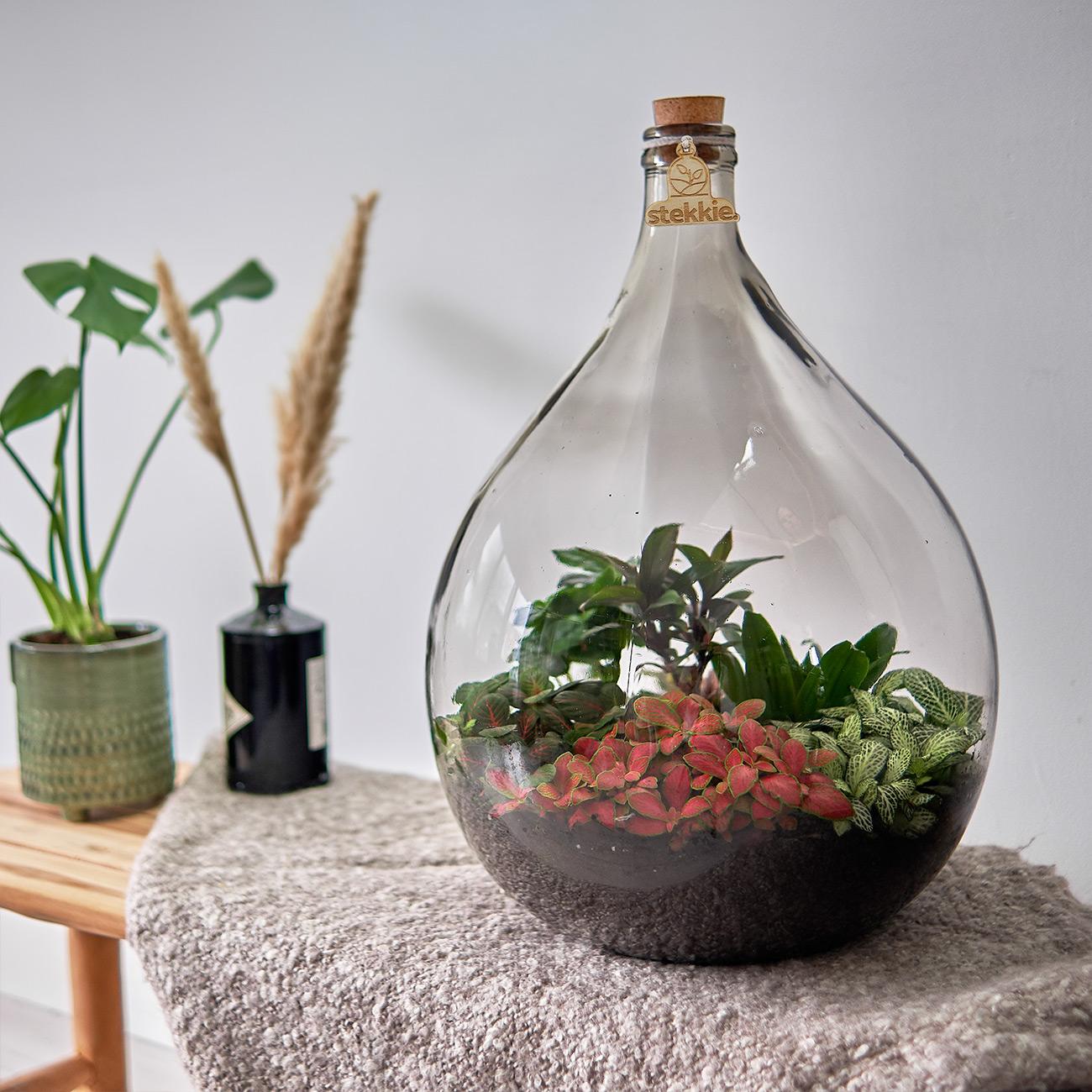 planten terrarium kopen, planten in een fles met kurk