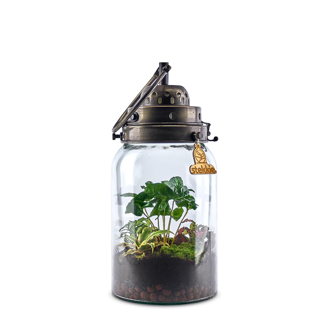 stekkie-cylinder-planten-terrarium-roze
