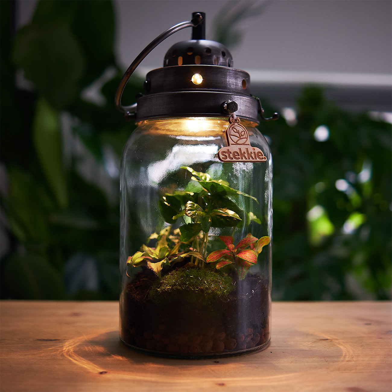 stekkie-cylinder-planten-terrarium-sfeer