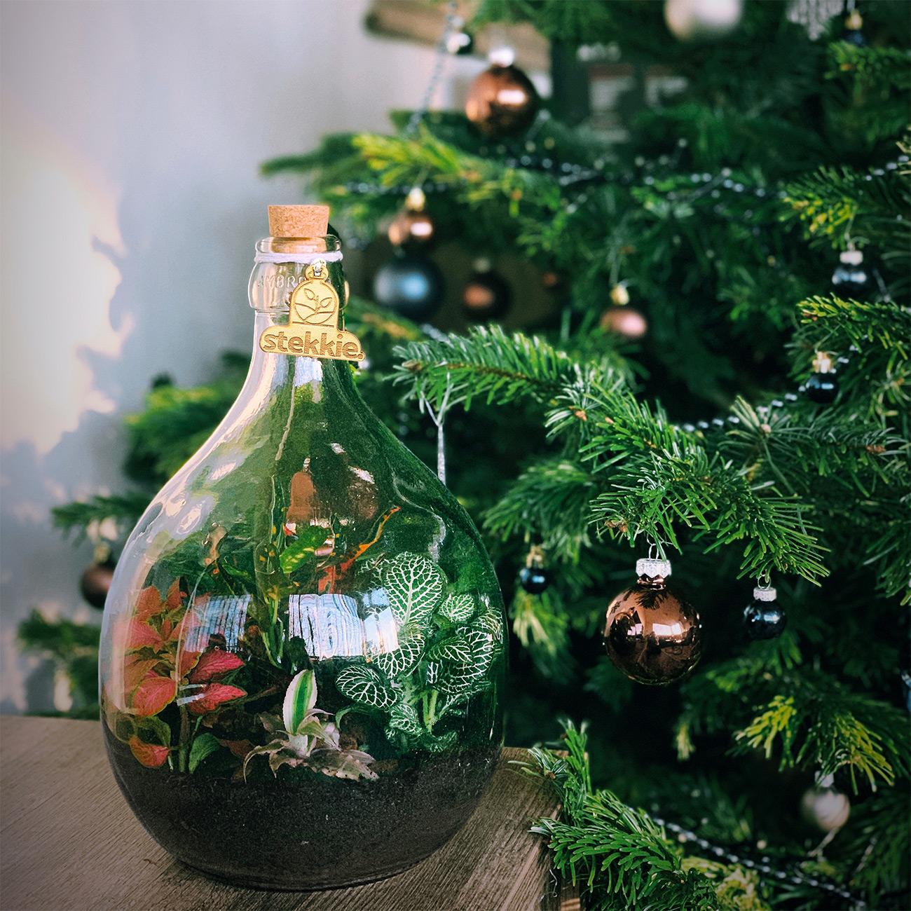 Leuke & originele kerstcadeaus mini-ecosysteem naast de kerstboom