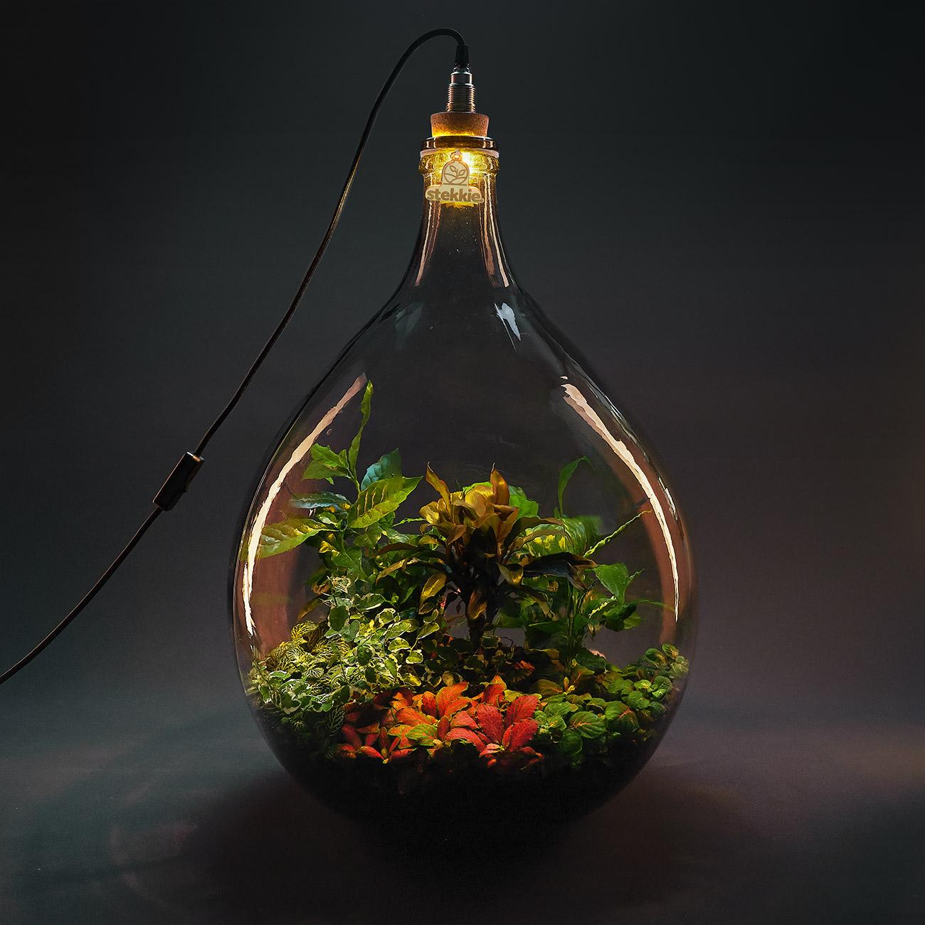 Planten in een grote glazen fles die sfeervol worden verlicht door een lamp op de fles
