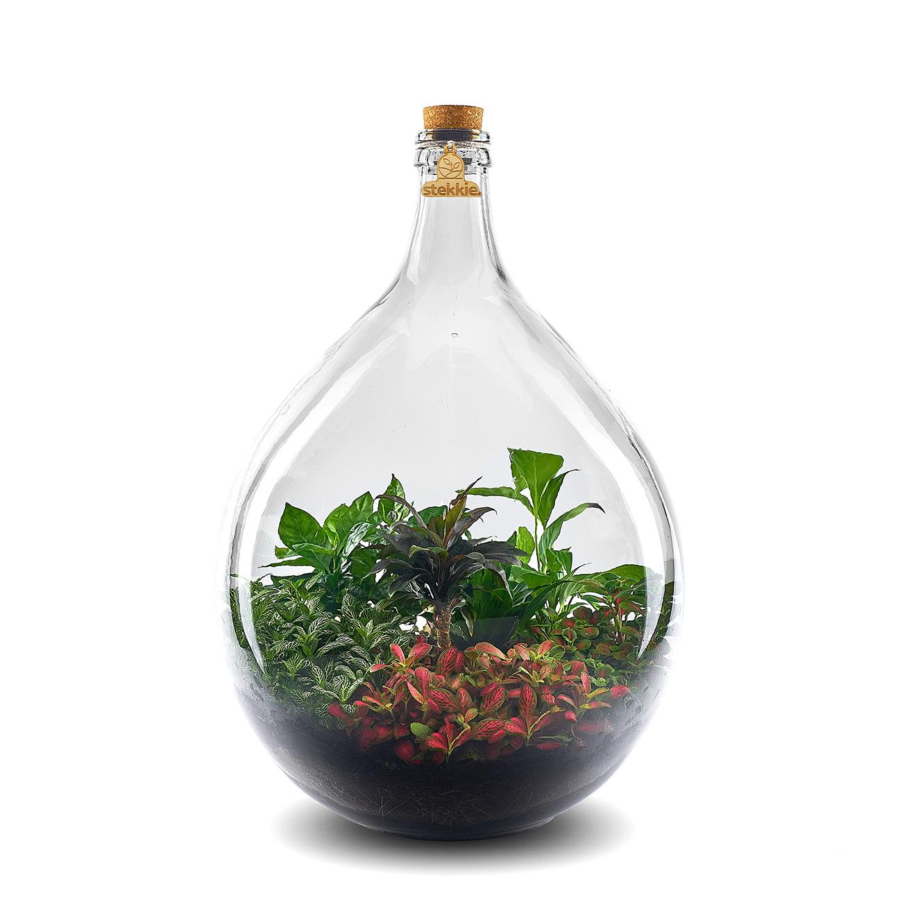 Planten in een grote glazen fles die voor zichzelf zorgen