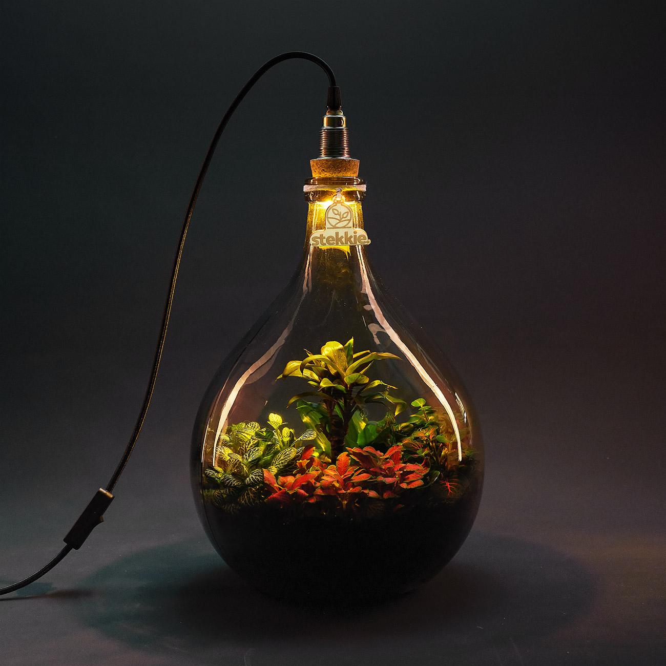 Planten in een glazen fles die sfeervol worden verlicht door een lamp op de fles
