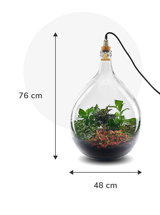 Stekkie Extra-large ecosysteem met planten in een afgesloten glazen fles met lamp. Afmetingen zijn 76 cm hoog en 48 cm breed