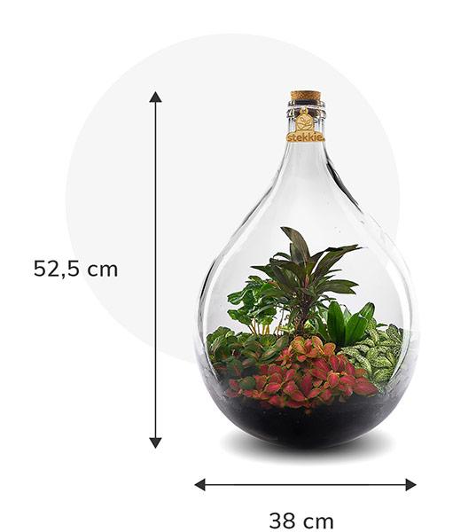 Stekkie Large ecosysteem met planten in een afgesloten glazen fles. Afmetingen zijn 52,5 cm hoog en 38 cm breed