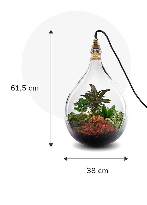 Stekkie Large ecosysteem met planten in een afgesloten glazen fles met lamp. Afmetingen zijn 61,5 cm hoog en 38 cm breed