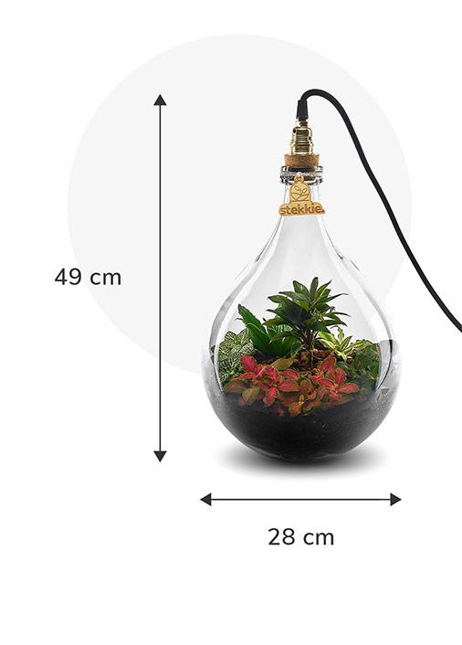 Stekkie Medium ecosysteem met planten in een afgesloten glazen fles met lamp. Afmetingen zijn 49 cm hoog en 28 cm breed
