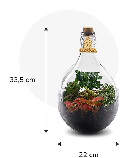 Stekkie Small ecosysteem met planten in een afgesloten glazen fles. Afmetingen zijn 33,5 cm hoog en 22 cm breed